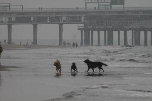 Hundeleben am Strand